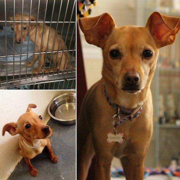 Dogs After The Adoption (24 pics)
