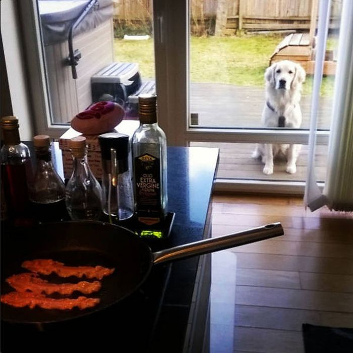 Dogs Begging For Food (44 pics)