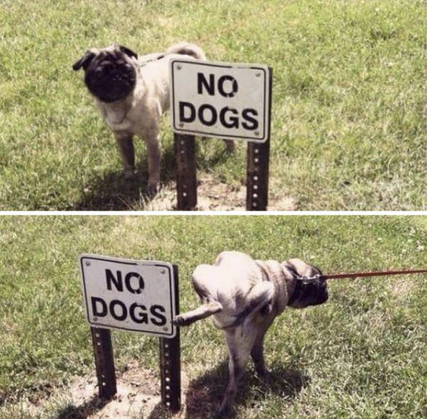 Animals Don't Care About Human Rules (22 pics)