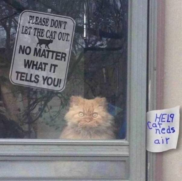 Funny Animals (40 pics)