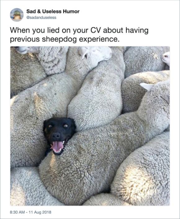 Funny Dog Tweets (20 pics)