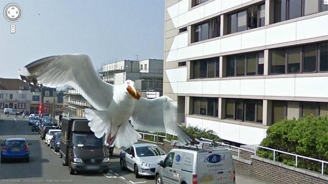 Animals On Google Street View (20 pics)