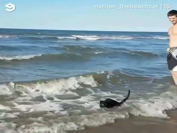 Beach Cat Who Just Loves To Go Swimming