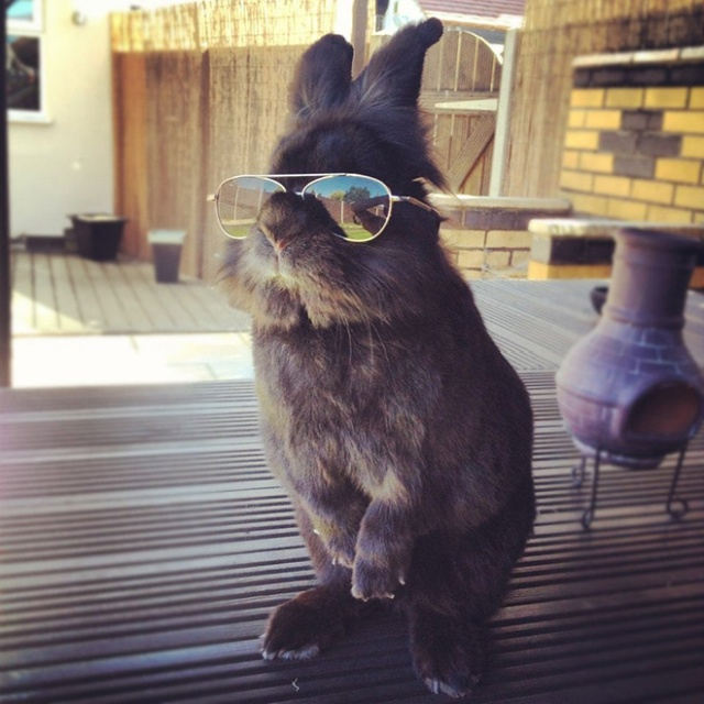 Bunnies Wearing Sunglasses (17 pics)