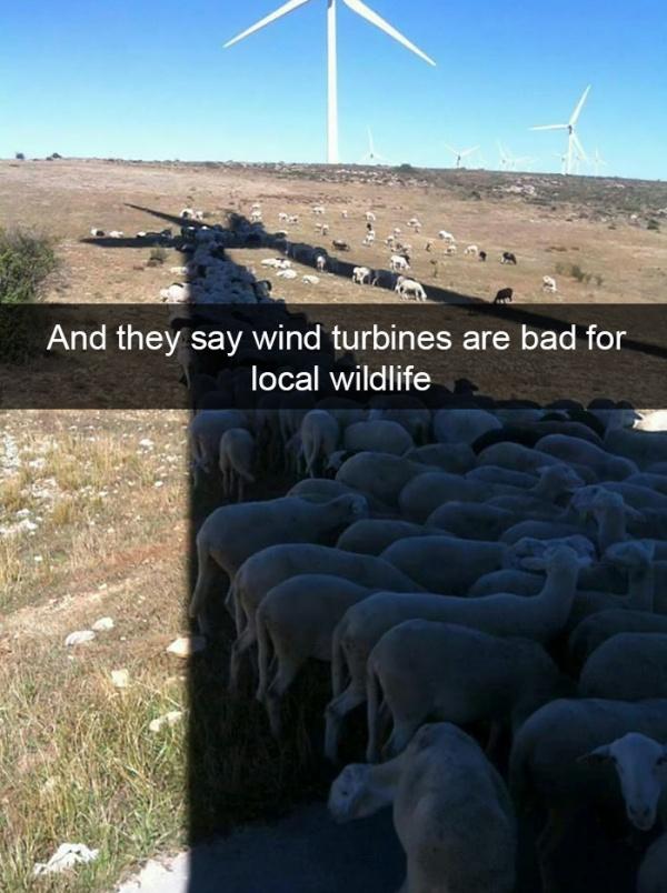 Funny Animal Snapchats (30 pics)