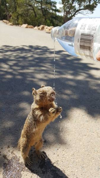 Funny Animals (47 pics)