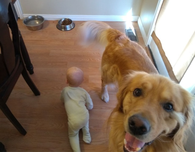 Father Illustrates The Friendship Between His Tiny Baby And Giant Dog (20 pics)