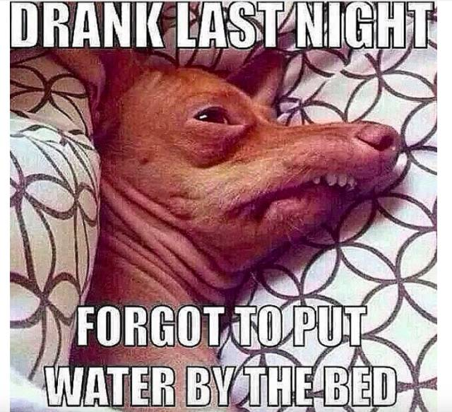 Alcohol Memes (58 pics)