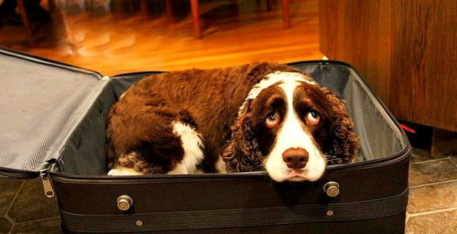 Husband Sneaks Dog Into Hospital In A Suitcase So His Dying Wife Can Say Goodbye (6 pics)