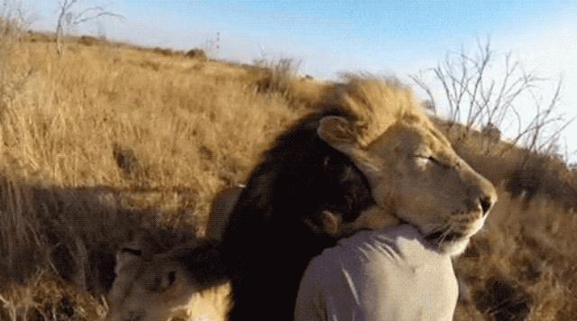 Cuddling Animals (13 gifs)