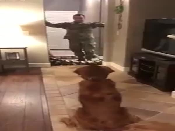 Dog's Reaction To Magic Trick