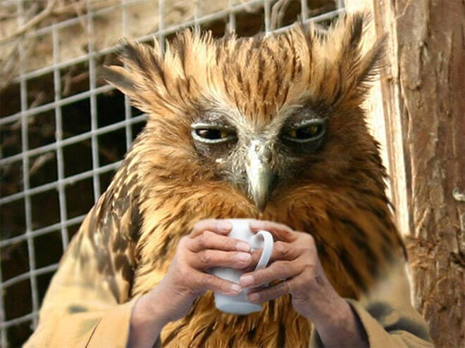 Funny Birds With Human Hands (20 pics)