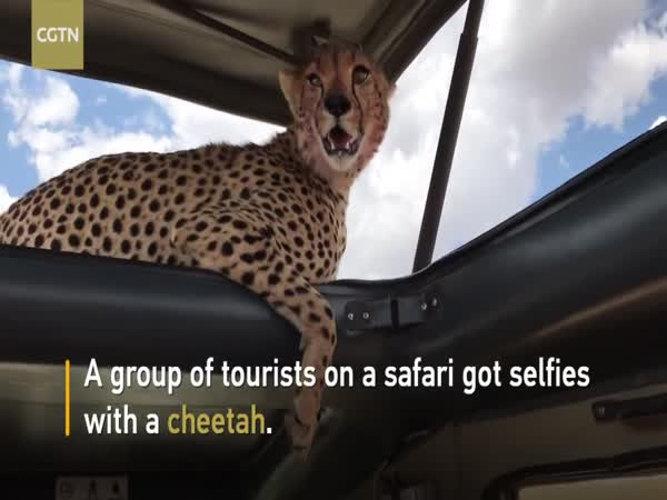 Tourists Grab Selfies With Cheetah