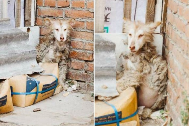 Huskies After The Rescue (9 pics)