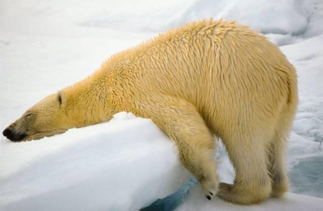 Comedy Wildlife Photography Awards (40 pics)