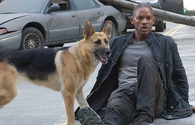 Abbey, The Dog From 'I Am Legend', Is Now 13 And Living Her Best Life (2 pics)