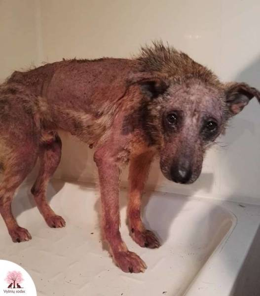 A Rescue Dog That's Almost Starved To Death Received A Second Chance (12 pics)