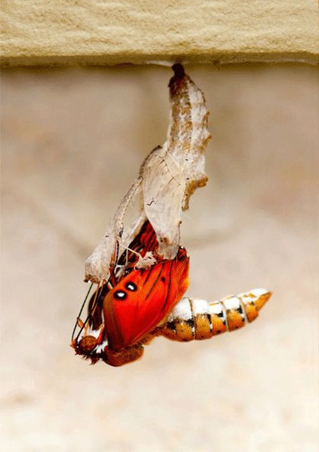 The Birth Of A Butterfly (10 pics)