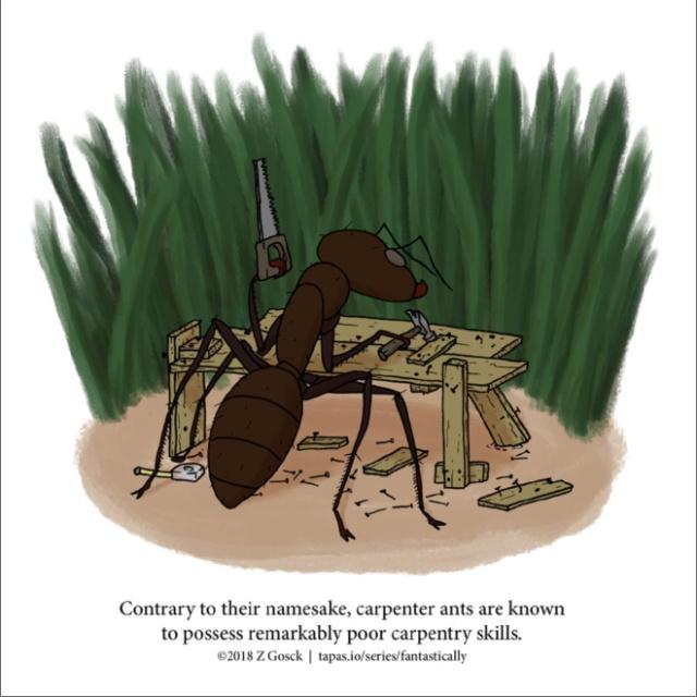 Interesting Animal Facts (20 pics)