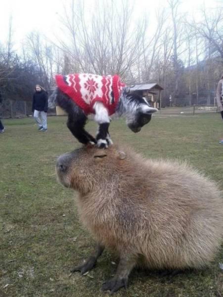 Funny Animals (44 pics)