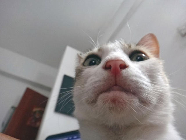 Cats Taking Selfies (21 pics)