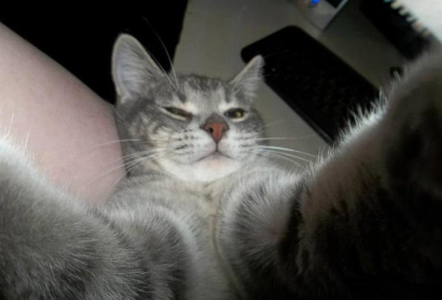Cats Taking Selfies (21 pics)