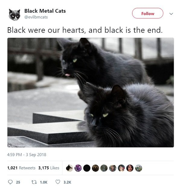 Black Metal Cats (25 pics)