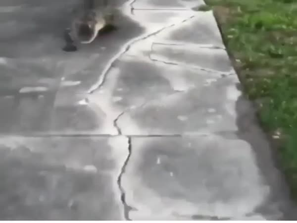 What A Cute Pet