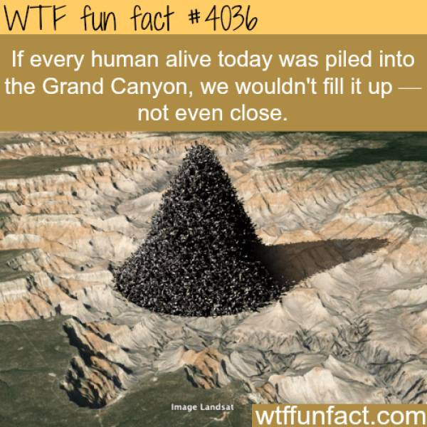 Collection Of Interesting Facts (38 pics)