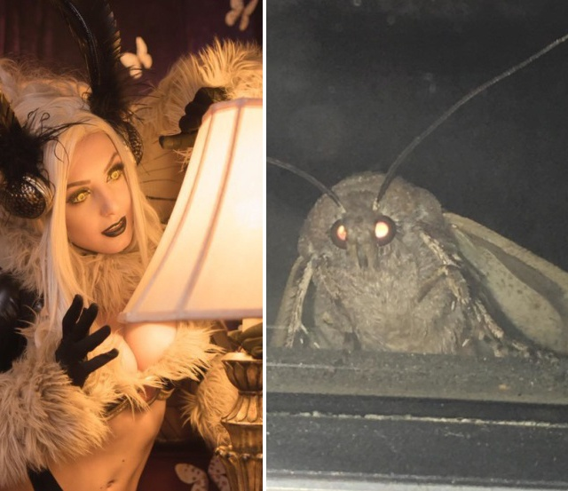 Jessica Nigri Cosplay With Moth (2 pics)