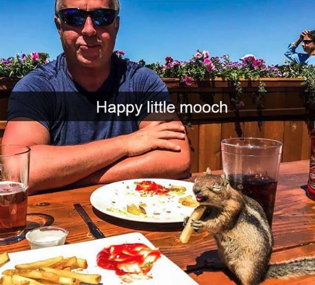 Funny Animal Photos On Snapchat (45 pics)