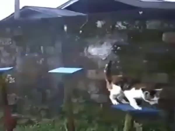 Its Time For Catto Parkour