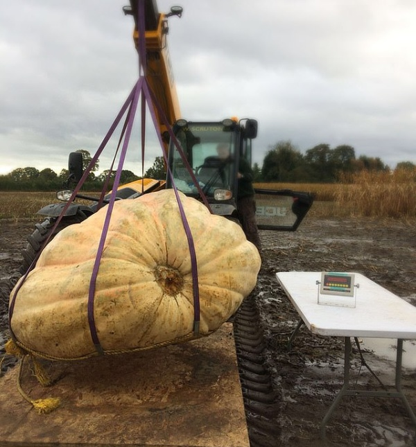 Giant Skull Made Out Of Britain's Biggest Pumpkin (4 pics)