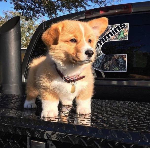 The Cutest Puppy Contest Winners (40 pics)