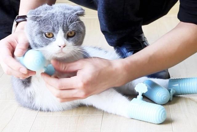 Strange Chinese Pet Accessory (5 pics)