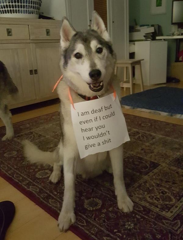 Funny Pets (22 pics)