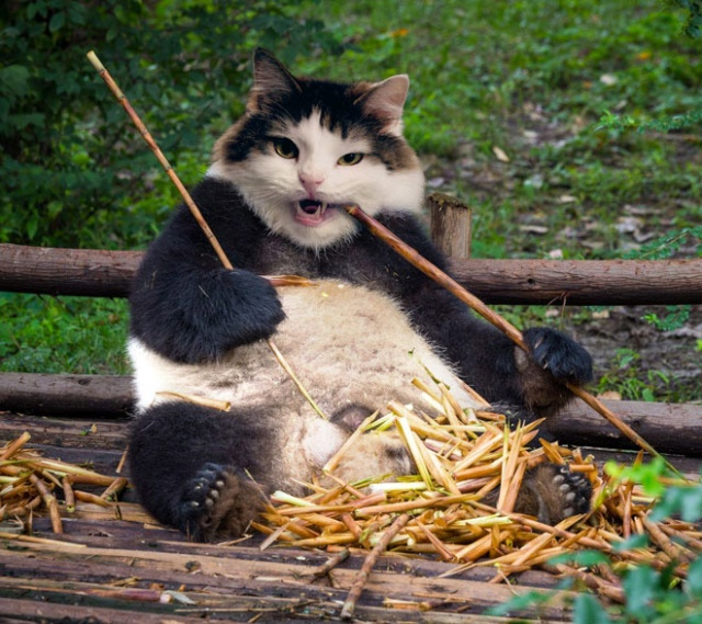 Funny Photoshop Cats (21 pics)