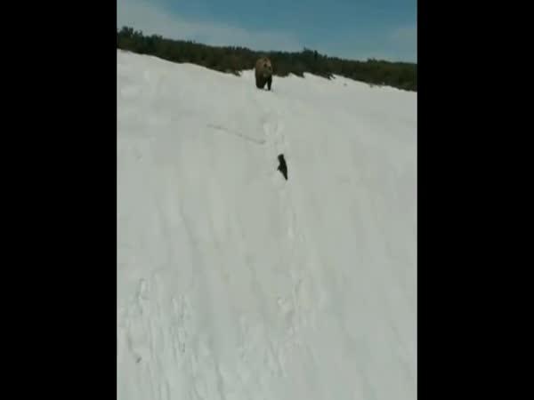 Bear Cub Climbing A Snow Clad Range