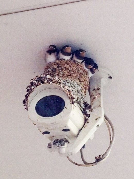 Acid Picdump (93 pics)