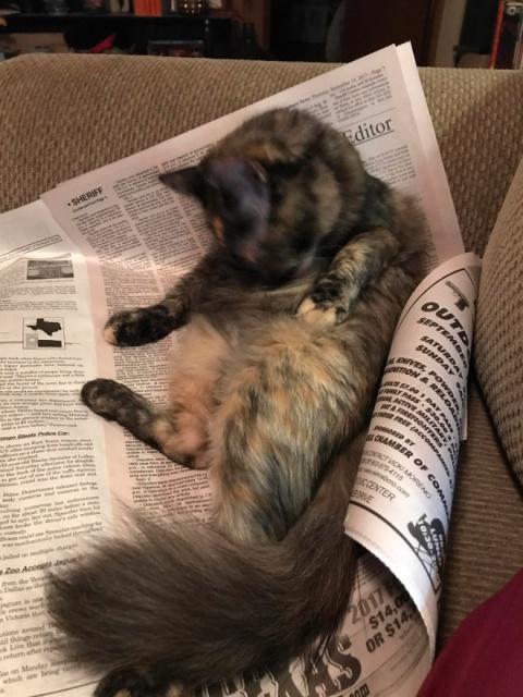 Cats Vs Reading (21 pics)