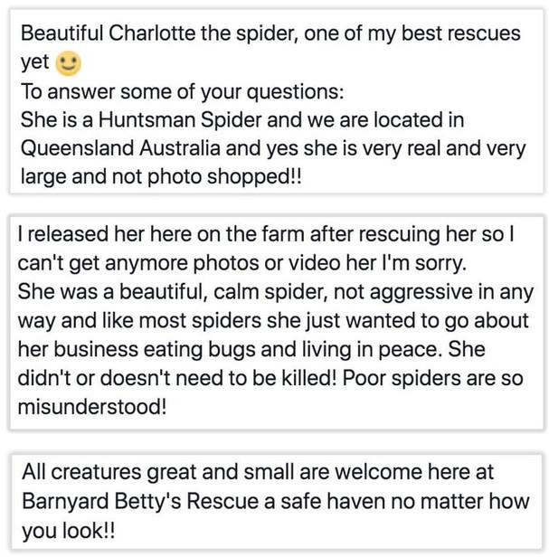 Saving A Giant Huntsman Spider (2 pics)