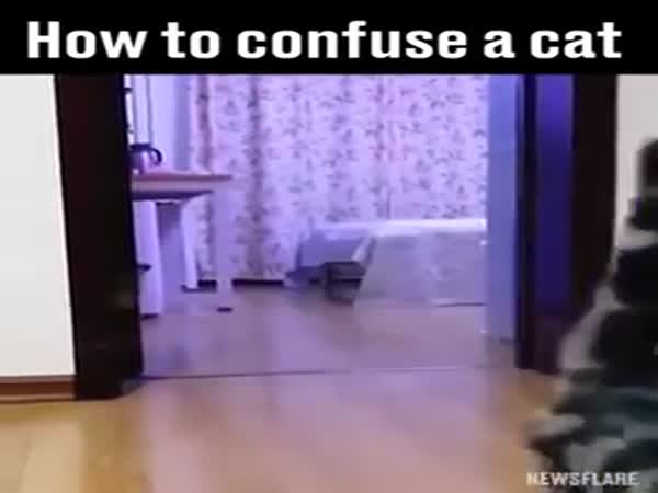 How To Confuse A Cat