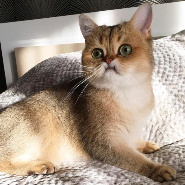 Surprised Cats (20 pics)