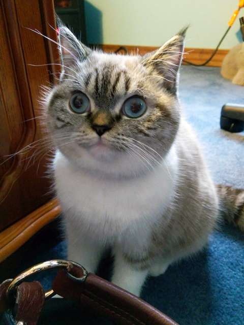 Surprised Cats (20 pics)