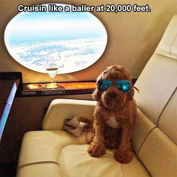 Rich Pets Of Instagram (40 pics)