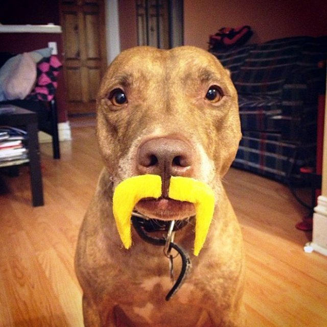 Scout Is The Most Patient Dog In The World (20 pics)