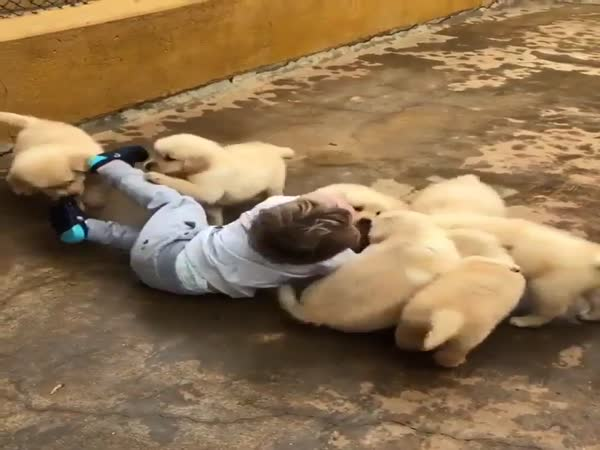 Toddler Gets Attacked By Adorable Puppies