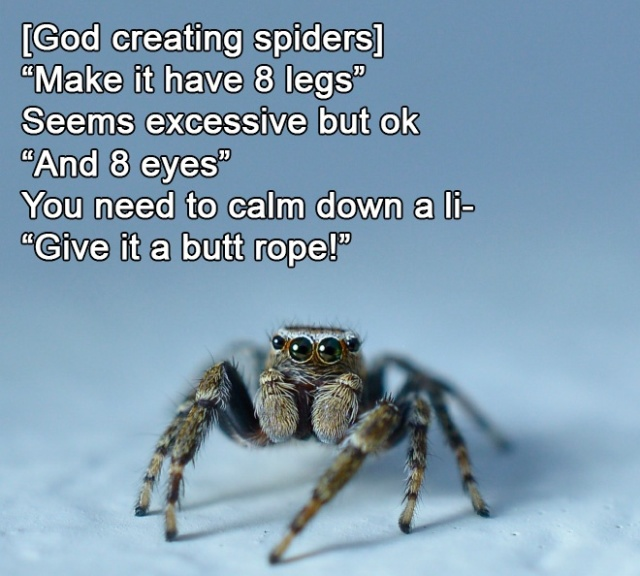 How God Created Animals (17 pics)