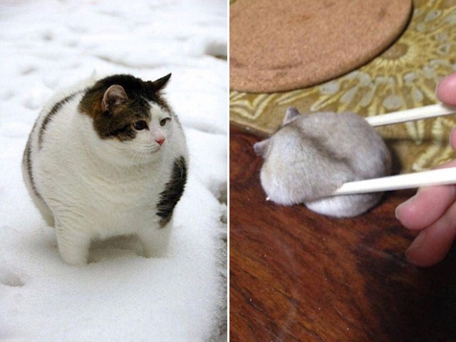 Real Life Round Animals (20 pics)