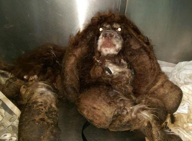 Abandoned Dog Gets Haircut (14 pics)